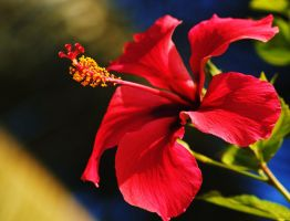 Hibiscus 2 by Tyyourshoes