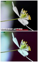 Anemone Action by Iseeyoulaterboi
