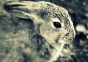 bunny by philbertk