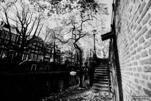 Gnarled trees over the canal by Z-GrimV