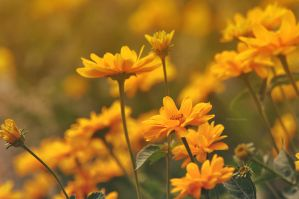 the yellows of spring by LindaMarieAnson