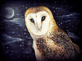 Barn Owl by ReggieTC