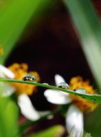 Weeds in drops by bugadrienne