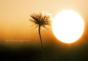 Sunshine Flower by Stridsberg