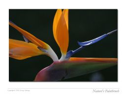 Nature's Paintbrush by QNetX