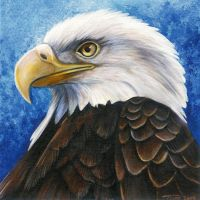 Bald Eagle Portrait by DragonosX