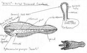Oralopod - general anatomy by palaeorigamipete