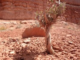 Arches 8 [tiny tree] by sonicntaylstock