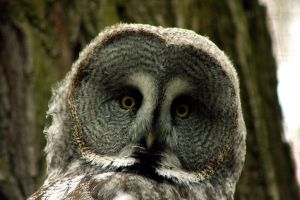 Owl by MattEdson