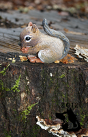 Baby Squirrel Sculpture by dipnoi