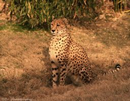 Sunlit and proud by TlCphotography730