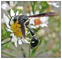 potter wasp II by super-chicken