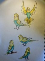 Cloud the budgie by BlackWolf543