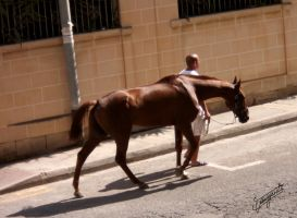 Horse in the streets of Malta by imargarita