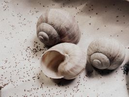 little treasures: poppy seeds and empty shells by snusmumrikenn