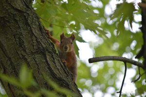 I see you by trollwaffle