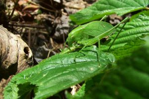 katydid by PhotoBoothLoveXx