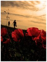 behind poppies by nieraviel