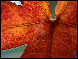 The Colour Of Autumn by Jenni77