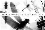 Dragonflies by spiritsighs-stock