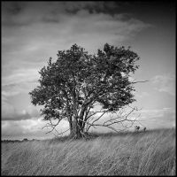 Tree in black and white by mjagiellicz
