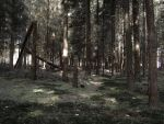 Chernobyl forest by Citruspers