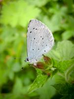Small Blue by iriscup
