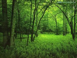 green rain forest by kittenstyle