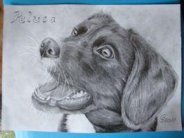 a dog in pencil by Vitadog