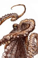 Octopus by dfbovey
