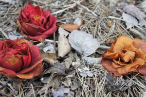 Beauty in death or life? by Dinopeal