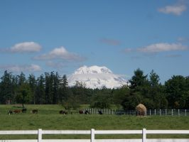 Grazing Cows and Mount Ranier by Singing-Wolf-12