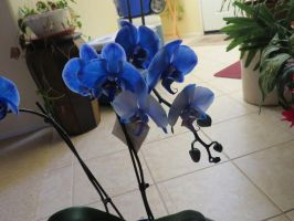 Blue Orchid - Stock 5 by CNLGraphics