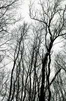 Branches Reaching Up by RyuzakiLivesOn