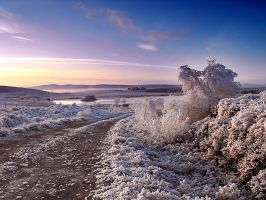 Frosty morning by Dulaich