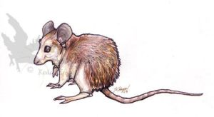 Spiny Mouse by CorvidaeArt