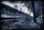 Forest of forgets by zardo
