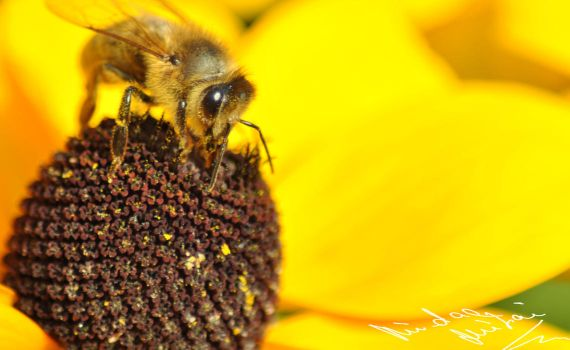 The Bee by unkmihai