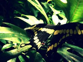 butterfly-2 by Julieheartsyou