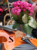 Violin and Flowers by ewensimpson