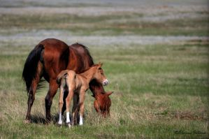 Foal and Mom by ElaineSeleneStock
