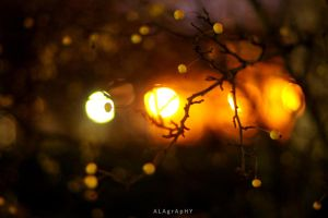 Christmas in the Air by alahay