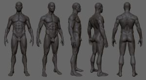 Anatomy study ZB3 by mojette