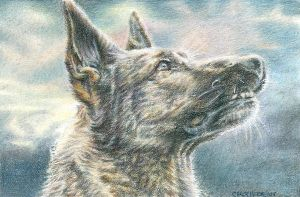 German Shepherd by Carol-Moore