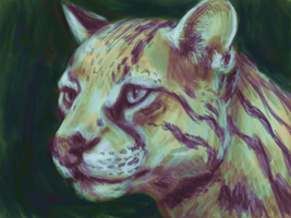 Ocelot V2 by Pagerda