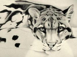 Clouded Leopard - Work in Progress by artistelllie