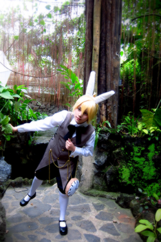 Alice in Musicland: White Rabbit by Kralle-K