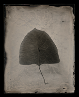 The Other Leaf by analogphoto