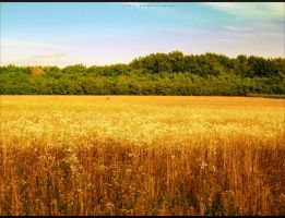 CornField2 by IooPa