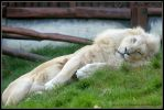 Just a short nap by AF--Photography